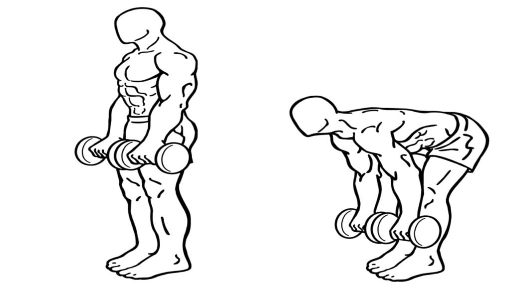 Best Back workout with dumbbells