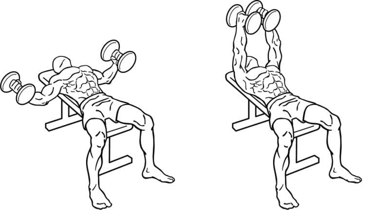upper body dumbbell workout chest