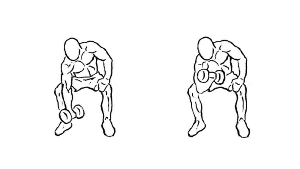Best Dumbbell biceps workout
