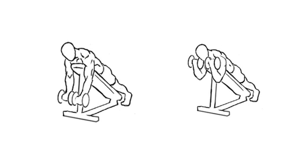 Best Dumbbell exercises for bigger biceps