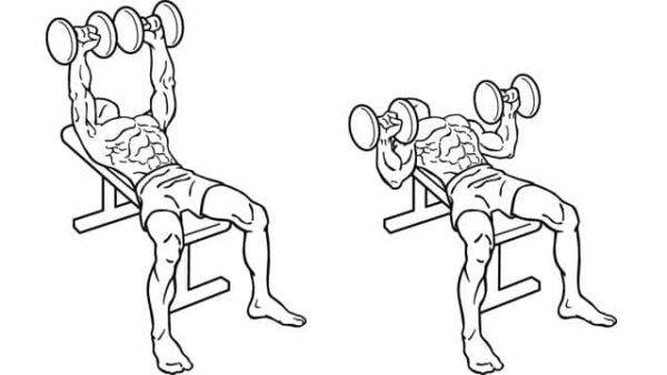 upper body chest workout with dumbbells