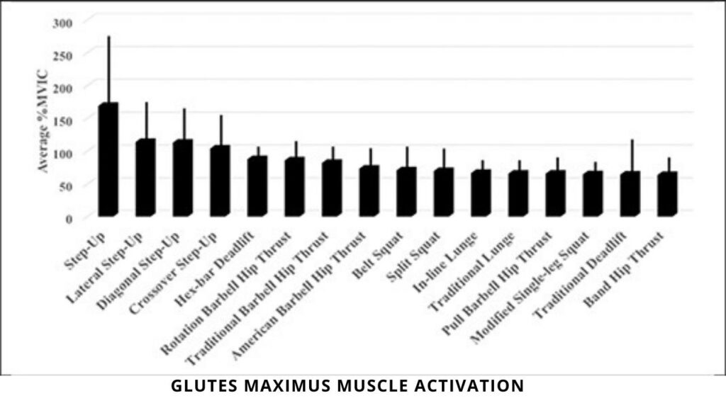 Glutes Maximus Muscle Activation in Compound Exercises