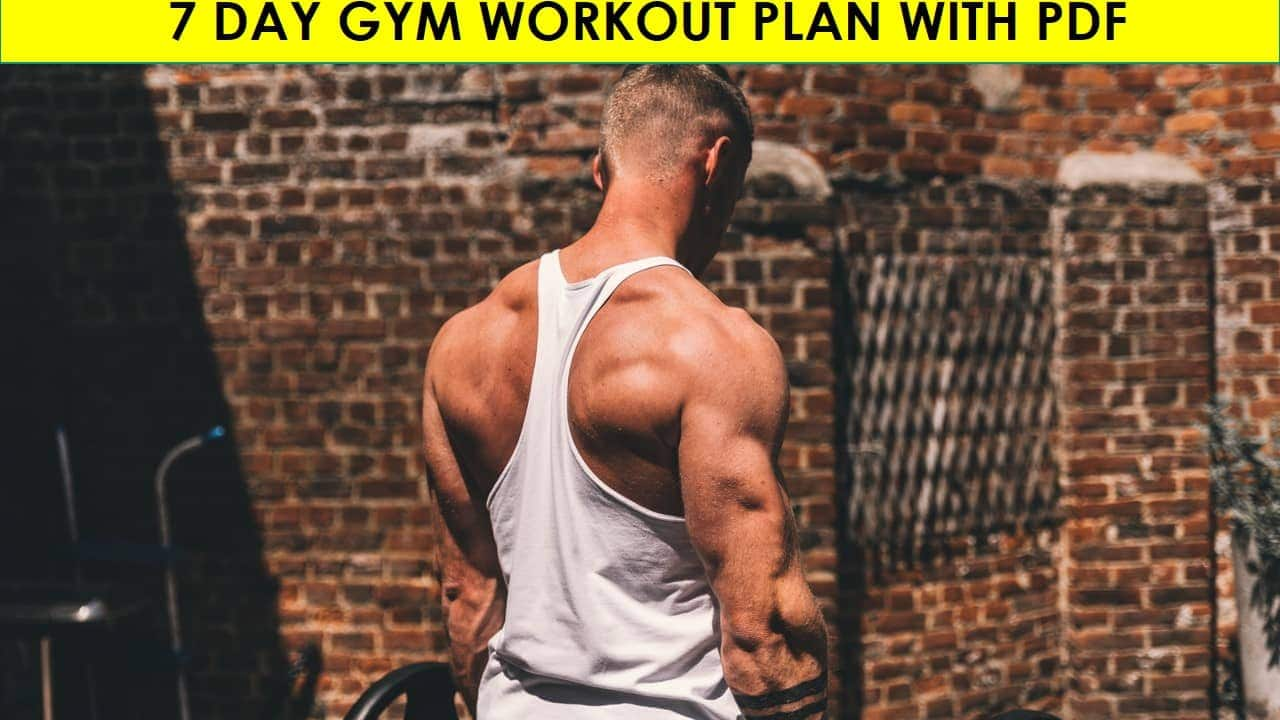7 day gym workout plan with pdf